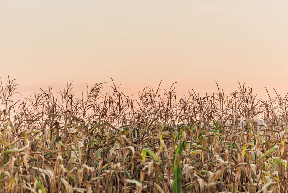 Die große Wirkung des kleines Korns